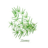 Sprigs of fresh delicious Rosemary in realistic style Stock Photography