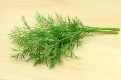 Sprigs of fresh dill Royalty Free Stock Images