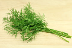 Sprigs of fresh dill Royalty Free Stock Photo