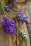 Sprigs of fresh lavender Royalty Free Stock Images