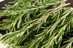 Sprigs of fresh rosemary. An aromatic potherb used as a seasoning in cooking, especially popular for meat dishes Royalty Free Stock Photos