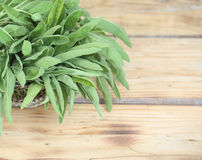 Sprigs of fresh sage with copyspace Royalty Free Stock Photos