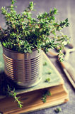 Sprigs of fresh thyme Royalty Free Stock Photography