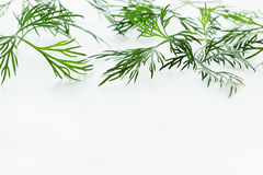 Sprigs of green dill on a white background. Royalty Free Stock Photos