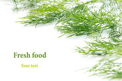 Sprigs of green dill on a white background. Frame with copy space for text. Stock Image