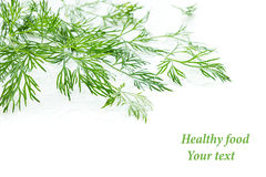Sprigs of green dill on a white background. Stock Photo