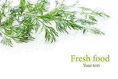 Sprigs of green dill on a white background. Wet green dill. Frame with copy space for text. Royalty Free Stock Images