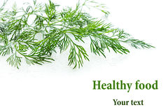 Sprigs of green dill on a white background. Wet green dill. Frame with copy space for text. Royalty Free Stock Photos