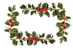 Sprigs of holly. On the white royalty free stock photography