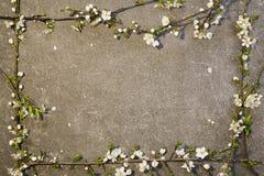 Sprigs kwiatonośny drzewo na drylują stół zdjęcie stock