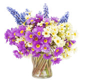 Sprigs Muscari and Primroses Royalty Free Stock Images
