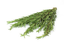 Sprigs Organic Rosemary at Angle Stock Image