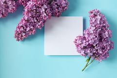 Sprigs of purple lilac on light blue background. stock photography