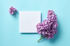 Sprigs of purple lilac on light blue background. royalty free stock image