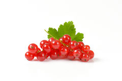 Sprigs of red currant berries Royalty Free Stock Image
