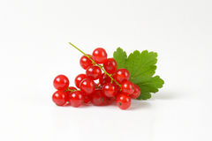 Sprigs of red currant berries Royalty Free Stock Photos