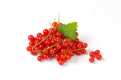 Sprigs of red currant berries Stock Photography