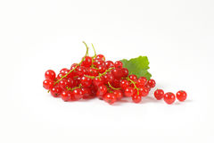 Sprigs of red currant berries Royalty Free Stock Photography