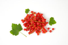 Sprigs of red currant berries Royalty Free Stock Images