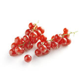 Sprigs of Red Currants on White Background Royalty Free Stock Image