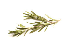 Sprigs of Rosemary isolated against white stock photo