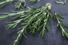 Sprigs of rosemary tied with string on a dark gray background stock photography