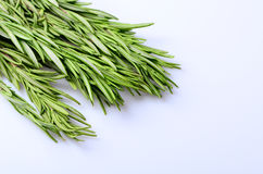 Sprigs of rosemary on a white background Royalty Free Stock Image