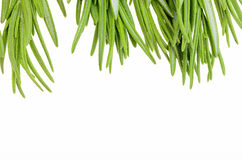 Sprigs of rosemary on a white background Stock Photo
