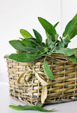Sprigs of sage Stock Photography