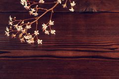 Sprigs with small white flowers on a dark wooden background with space for text.  royalty free stock photo