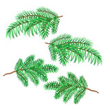 Sprigs of spruce vector Stock Photography