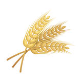Sprigs of wheat. Plant for brewing beer. Pub single icon in cartoon style vector symbol stock illustration. Stock Photography