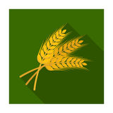 Sprigs of wheat. Plant for brewing beer. Pub single icon in flat style vector symbol stock illustration. Royalty Free Stock Photo