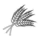 Sprigs of wheat. Plant for brewing beer. Pub single icon in outline style vector symbol stock illustration. Stock Photography