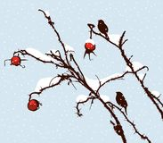 Sprigs of wild roses on a winter day. Vector image of the birds on the branches of wild rose on a snowy day Stock Images