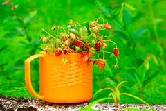 Sprigs of wild strawberries Stock Image