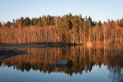 Sprigtime flooding. Springtime flooding in birch grown Stock Images