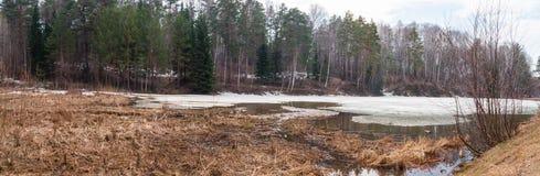 Spring湖在新西伯利亚Akademgorodok 免版税图库摄影