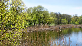 Spring湖,树的反射在水中 免版税库存图片