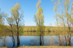 Spring湖 池塘春天 免版税库存图片