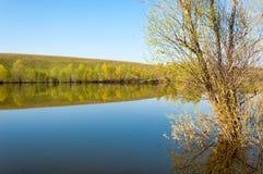 Spring湖 池塘春天 免版税图库摄影