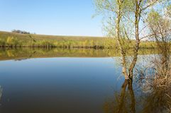 Spring湖 池塘春天 图库摄影