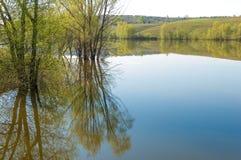 Spring湖 池塘春天 库存图片
