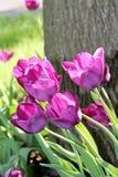 Spring& x27; высочество s стоковые изображения rf