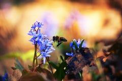 spring_2的气味 库存图片