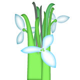 Spring. Three flowers and verdure on white background Royalty Free Illustration