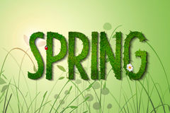 Spring. Grass font on fresh green background Royalty Free Stock Photo