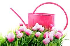 Spring Royalty Free Stock Image