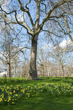 Spring. Flowers and a tree in the park on a sunny day Royalty Free Stock Images