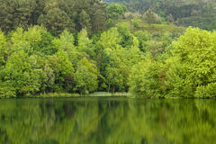 Spring湖 免版税库存图片